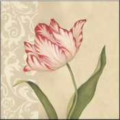 Cream Tulip - DL - Accent Tile